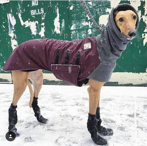 Resultado de imagen de no socks with shoes winter