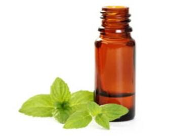 Organic Peppermint Essential Oil 15ml