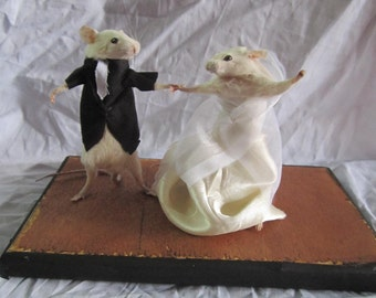 taxidermie souris mariée taxidermy rat mouse cabinet de curiosité odditties
