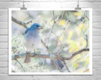 Blue Bird Picture, Nature Photography, Bird Art, Gift for Bird Lovers, Jay Bird, Pastel Blue, Birder Gift, Wildlife Print, Canvas Photograph