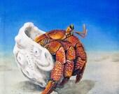 Red Hermit Crab original ...