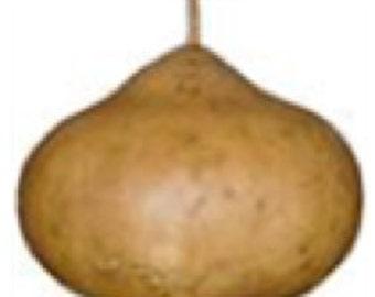 Corsican- Kettle Gourd Seeds