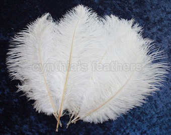 """8 Grade B 12-14"""" Snow White Ostrich Drab Plume Feathers Wedding, Millinery, NEW S-12"""