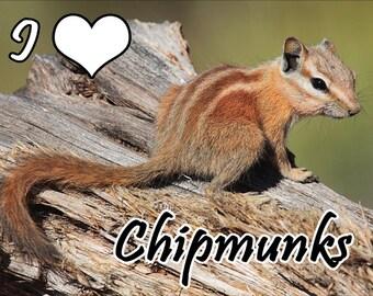 I Love Chipmunks Fridge Magnet 7cm by 4.5cm,