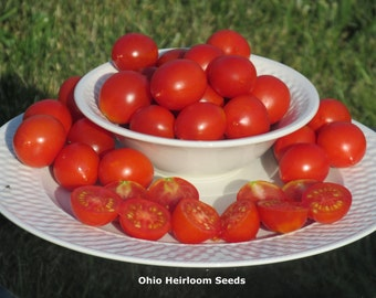 Organic Riesentraube Heirloom Tomato Seeds- 40+ Seeds