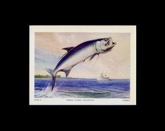 "MATTED Vintage Fish Print - ""Tarpon"" c. 1949 - Fish Book Plate - Fish Wall Art - Rustic Cabin Decor - Fish Illustration - Fishing Gift"