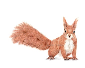 Original Barnleby the squirrel drawing