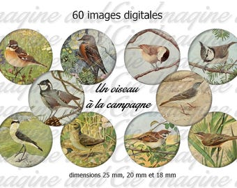 Bird in the countryside / Cabochon digital image instant download Diy collage sheet digital printable cap instant download