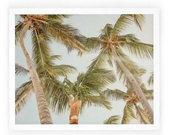Palm Trees Photography / Landscape / Home Photography Decor / Art Print / Tropical / Beach / Wall Art / Photography Decor. Palm Views Print
