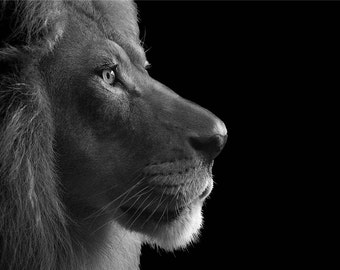King - By Melinda Klein Photography