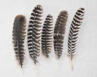 Smudge Feathers - Turkey Feathers - Cruelty Free!