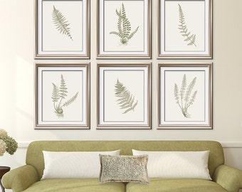 Ferns Garden Botanical Prints (Series J) Set of 6 - Art Prints (Featured in Dried Herb on Pale China) Botanical Print Set