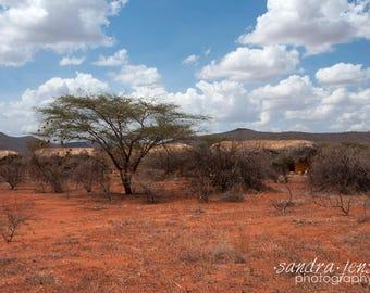 "8x10"" Photo/Print - Samburu National Reserve, Kenya"