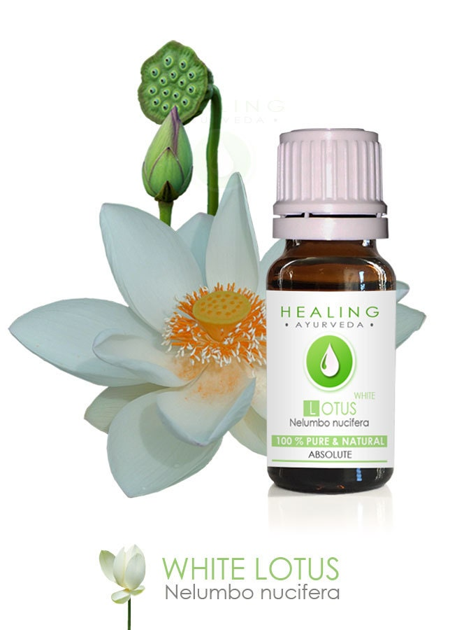 White Lotus Absolute- Pure Lotus Natural flower oil-Nelumbo nucifera ...