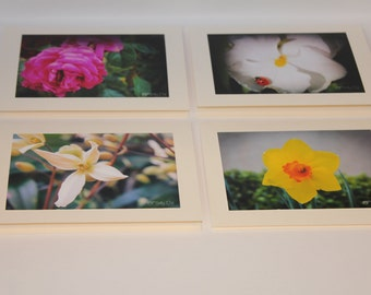 All Occasion Blank Cards - Flower Power! - Set of 4 Photo Cards