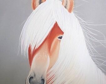 Horse, Horse, pastel, soft pastel 30x24cm