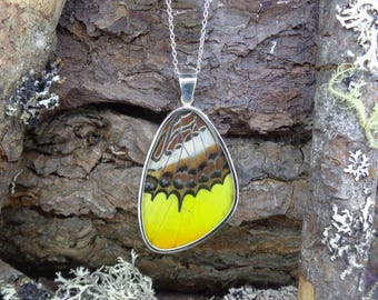 Ethically Sourced Real Butterfly Wing Pendant - Solid Silver Set Great Orange Tip, Sustainable Peru Farm, FREE SHIPPING WORLDWIDE (8886)S