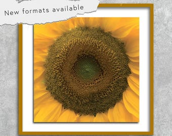 Sunflower Sun flower photo poster poster printable instant download 5 X 5 8 X 8 10 X 10 12 X 12 15 X 15 16 X 16 18 X 18 20 X 20 30 X 30 50 X 50