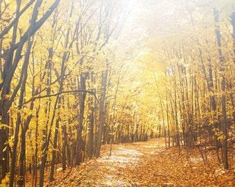 Golden Sunlight - autumn decor, fall photography, gold, yellow, nature, landscape, forest, art print
