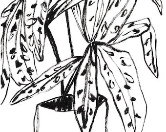 Original Illustration - Plant Illustration