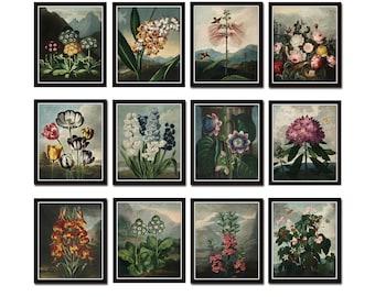 Botanical Print Set No. 14, Antique Botanical Prints, Giclee, Art Print, Botanical Prints, Wall Art, Print, Cottage Decor, Botanical Art