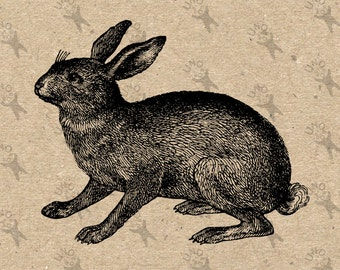 Vintage image Hare Rabbit Lepus Instant Download Digital printable clipart graphic decor prints t-shirts, burlap transfer collage HQ300dpi