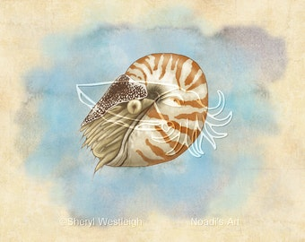 Natural History Nautilus, 7x5 Print on Fugi Crystal Archive Matte - Unframed