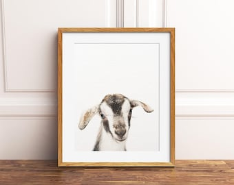 Nursery Art, Goat Print, Nursery Animal Wall Art, Cute Baby Goat, Farm Animal Art, Little Goat Photo, Nursery Decor, Kids Room Printable Art