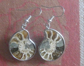 Beautiful Ancient Moroccan Ammonite Fossil Earrings