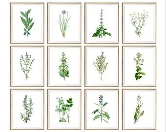 Green Botanical Art Print SET of 12 bay print, bay illustration, rosemary drawing, rosemary art print, basil illustration, basil art print