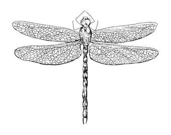 Dragonfly - Art Print