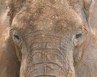 Elephant,Africa,Tanzania,Elephant Portrait,Serengeti,Wall Art,Home Decor,Safari,Brown,Animal Portrait,Wildlife Photography