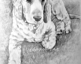 Custom Pet Portrait Graphite Pencil 11x14 hand drawn