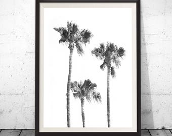 Palm Tree Print, Tropical Print, Black And White Palm, Printable Palm, California Tree Art, Tropical Wall Art, Tropical Decor, Large Poster