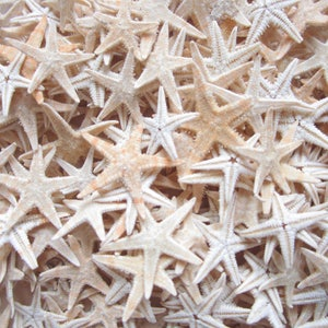 Damaged Tiny Tan Starfish 100 Pieces  Bulk Starfish Starfish Starfish Decor