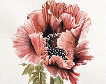 Pink Poppy - Original Watercolor