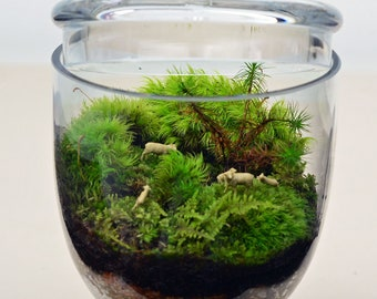 Moss Terrarium // Sheep // Green // Mini Apothecary Jar // Little People // Live Moss
