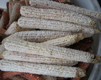 """30 Real White Corn cobs  8"""" to 12"""" LONG  Can Be Used For Crafts, Corn Cob Pipes More Uses.."""