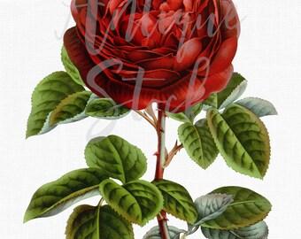 Red Rose Clipart 'Charles Lefebvre Rose' Digital Image Instant Download for Wedding Invitations, Wall Decor, Scrapbook, Crafts...