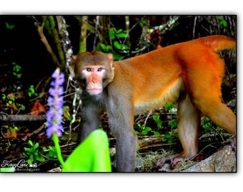 Monkey Black Framed Wall Art Photography