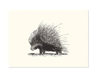 Porcupine, art print 5x7 Animal Art Drawing, illustration, home decor, Nursery, wall art, postcard