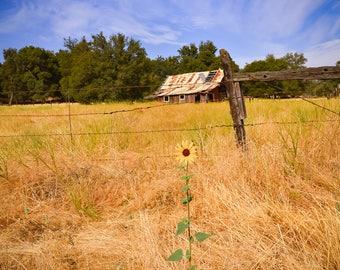 Metal photo Old Barn California