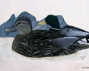 Inseparable Mallards Special Size Archival Print 7.5 x 10.5 in. Watercolour. Gouache Archival Print. SFA (Small Format Art) Mallards. Ducks