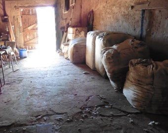 Bales in the Shearing Shed. (photo card)