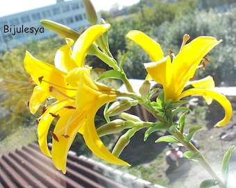 Handmade Lily flower, polymer clay flower, Branch Lily clay,yellow Lily porcelain,Lily Flower custom made,interior bouquet,interior flower