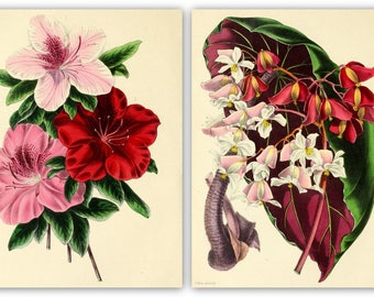 Paxton's Magazine of Botany Complete 16 volumes 700 color plates  high resolution instant digital download