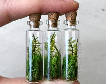 Three Live Fern Moss Terrarium Pendants