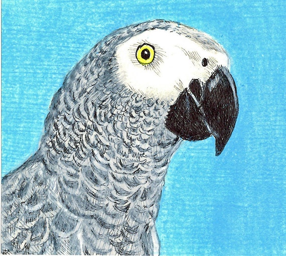 Sally Blanchard Original Prismacolor Pencil and Ink Portrait Drawing of a Congo African Grey Parrot
