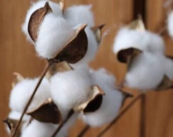 30pcs Natural Cotton Stem Boll 12'' for Floral Arrangement