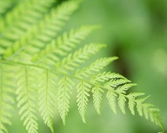 Nature Photography - Fern Photograph - Ferns - Nature - Fern - Fine Art Photography Print - Green Home Decor